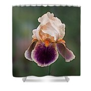 Iris Curls Shower Curtain