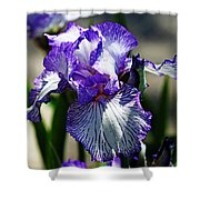 Iris Dressed For Royalty Shower Curtain