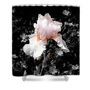 Iris Emergance Shower Curtain