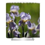Iris Feild Shower Curtain