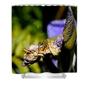 Iris Flower And Visitor Shower Curtain