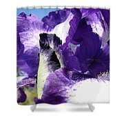Iris Flower Art Print Purple Irises Botanical Floral Artwork Shower Curtain