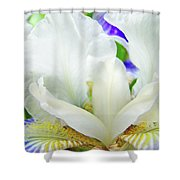Iris Flower Art Print White Blue Purple Irises Baslee Troutman Shower Curtain