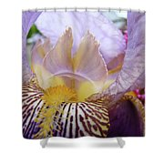 Iris Flower Art Purple Lavender Irises Giclee Prints Baslee Troutman  Shower Curtain