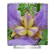 Iris Flower Lavender Purple Yellow Irises Garden 19 Art Prints Baslee Troutman Shower Curtain
