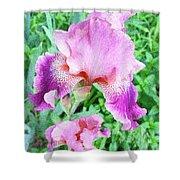 Iris Flower Photograph I Shower Curtain