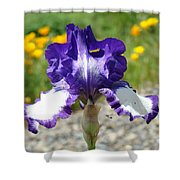 Iris Flower Purple White Irises Nature Landscape Giclee Art Prints Baslee Troutman Shower Curtain