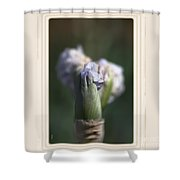 Iris Flower Starts To Reveal And Design Shower Curtain