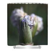 Iris Flower Starts To Reveal  Shower Curtain