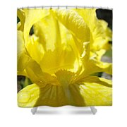 Iris Flower Yellow Macro Close Up Irises 30 Sunlit Iris Art Print Baslee Troutman Shower Curtain