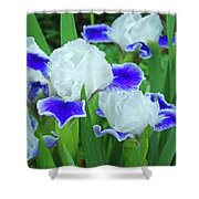 Iris Flowers Art Prints Blue White Irises Floral Baslee Troutman Shower Curtain