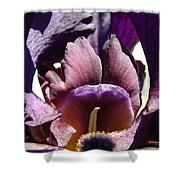 Iris Flowers Purple Irises Artwork Prints Framed Canvas Cards Nature Gardens Shower Curtain