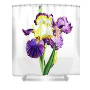 Iris Flowers Watercolor  Shower Curtain