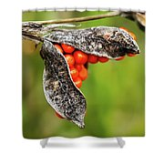 Iris Foetidissima - Stinking Gladwyn Shower Curtain
