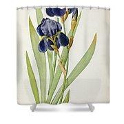 Iris Germanica Shower Curtain