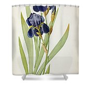 Iris Germanica Shower Curtain by Pierre Joseph Redoute