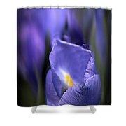 Iris Glow Shower Curtain