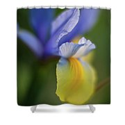 Iris Grace Shower Curtain by Mike Reid