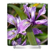 Iris Haiku Shower Curtain