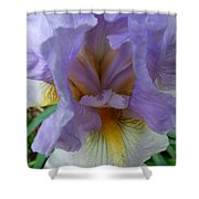 Iris Heart Shower Curtain