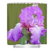 Iris In Summer Rain  Shower Curtain
