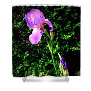 Iris In Sunshine Shower Curtain