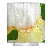 Iris In The Rain II Shower Curtain
