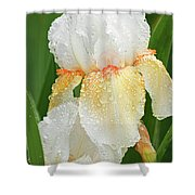 Iris In The Rain Shower Curtain