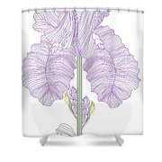Iris Line Drawing Two Shower Curtain