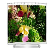 Iris Looking Downward Shower Curtain