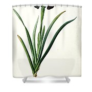 Iris Luxiana Shower Curtain
