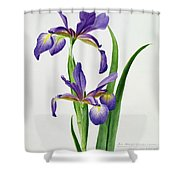 Iris Monspur Shower Curtain