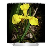 Iris Of The Marshes - 1 Shower Curtain
