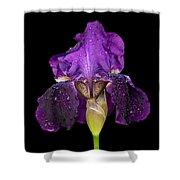 Iris On Black Shower Curtain