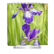 Iris Pair Shower Curtain