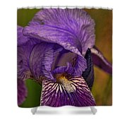 Iris Popping Out Shower Curtain