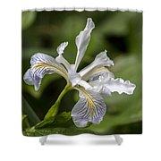 Iris Profile Shower Curtain