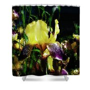 Iris Purple And Yellow Shower Curtain