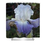 Iris Singing The Blue Shower Curtain