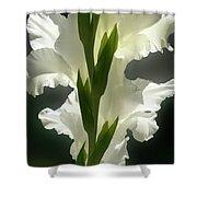 Gladiolus Spectacular #2 Shower Curtain