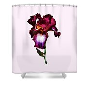 Iris Splash O' Wine Shower Curtain