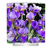 Iris Splendor Shower Curtain