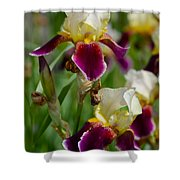 Iris Spring Shower Curtain