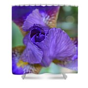 Iris Square Shower Curtain