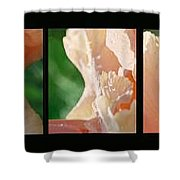 Iris Shower Curtain by Steve Karol