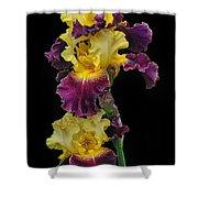 Iris Triple Shower Curtain