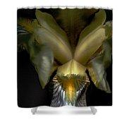 Iris Two Shower Curtain