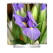 Iris Unfolding II Shower Curtain