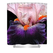 Iris Up Close Shower Curtain