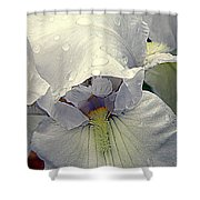 Iris With A Bonnet Series 7 Shower Curtain